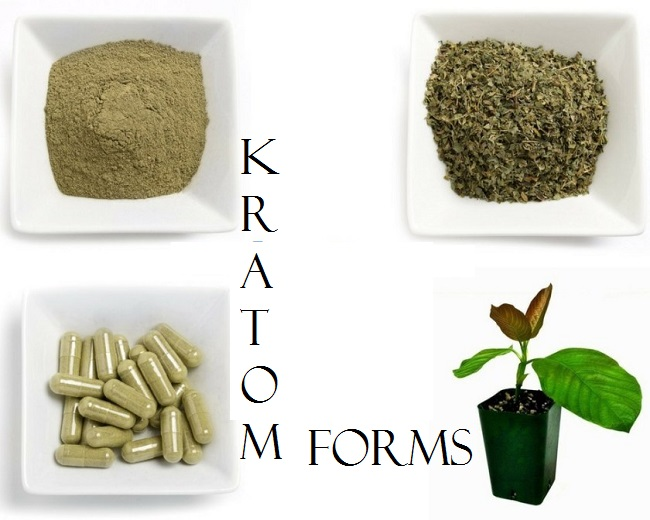 Kratom Forms
