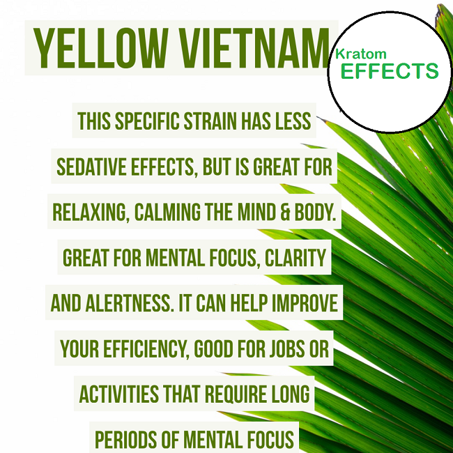 Yellow Vietnam Kratom Effects