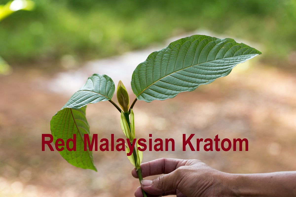 Red Malaysian Kratom Strain